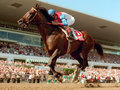Picture: 1995 Cigar original horse racing photo/poster fits a standard frame.